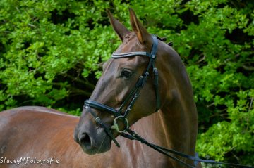 wedstrijdspanning paard wedstrijdstress